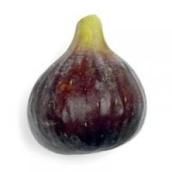 Aroma de Figo